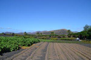 Finca de Uga e Isla de Lobos 095 (FILEminimizer)