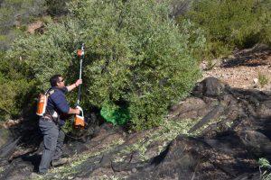 Sierra del Segura - Origen 093 (FILEminimizer)