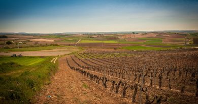 Ribera de Duero, destino para 2018