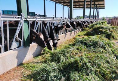 Ganaderos y fabricantes reivindican los beneficios de la leche en su Día Mundial