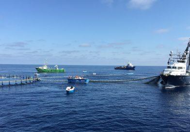 Balfegó presentará al Mapa su nuevo protocolo de pesca de atún rojo